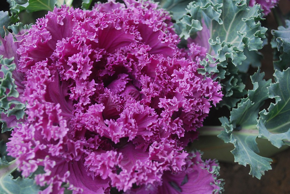 Ornamental Cabbage Bouquet