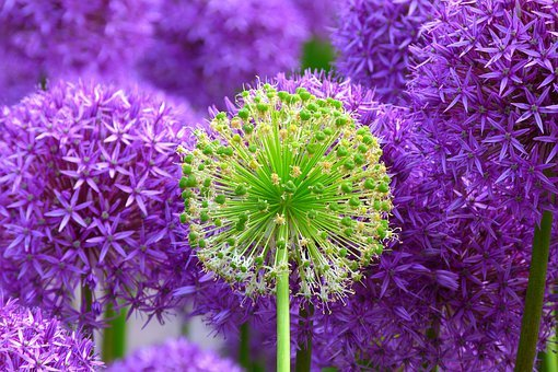 Purple Flowers Images      Pixabay      Download Free Pictures Blossom Bloom Plant Flowers Purple Violet