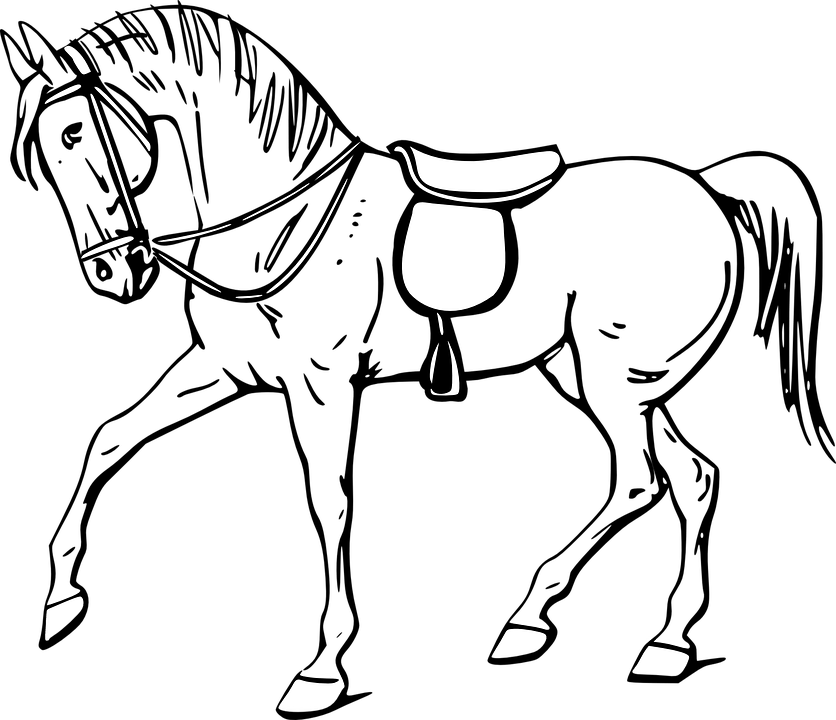 Outline Herd Horses