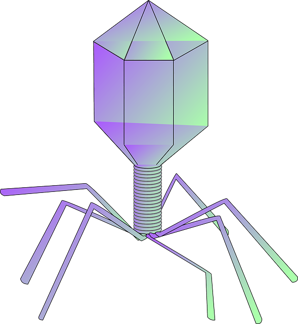 Bacteriophage Structure Types