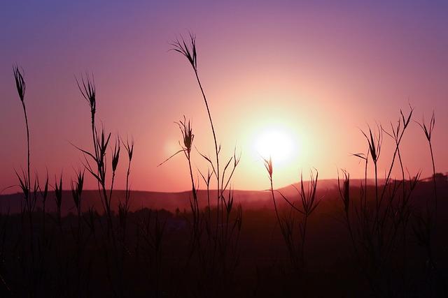 Free Photo Sunset Silhouette Landscape Free Image On