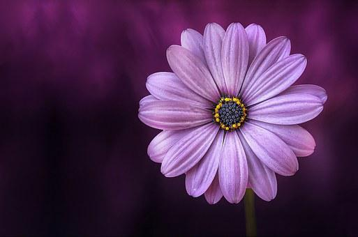 Purple Flowers Images      Pixabay      Download Free Pictures Flower  Purple  Beautiful  Beauty  Bloom