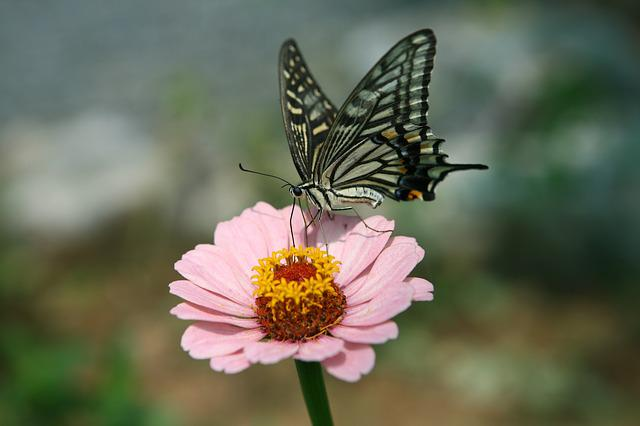 Butterfly Picture 30 Kb