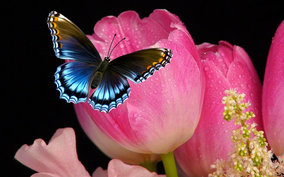 Tulips And Butterflies Animated