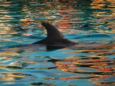 Dolphin Fin Nature · Free photo on Pixabay