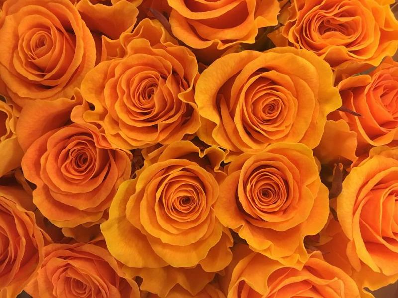 Rose Flower Flowers      Free photo on Pixabay rose flower flowers gold orange