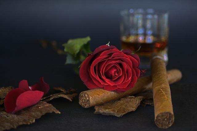 Free Photo Rose Red Rose Cigar Free Image On Pixabay 1473690