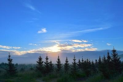 Sunrise Field Mist Pine · Free photo on Pixabay