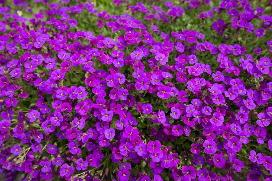 Violet Flowers Nature      Free photo on Pixabay violet flowers nature plant purple viola