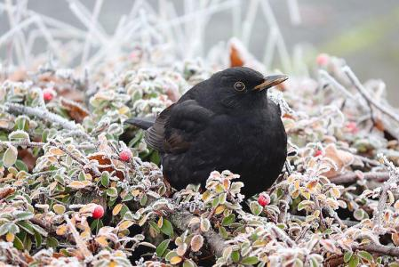 1,000+ Free Blackbird & Bird Images - Pixabay