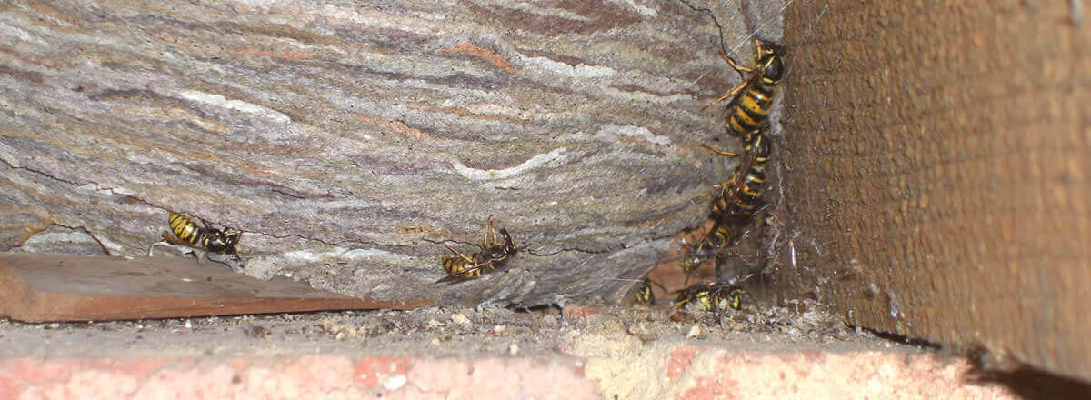 Bed Nests Do Bug What Look