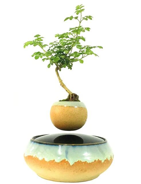 Levitating Bonsai Sale