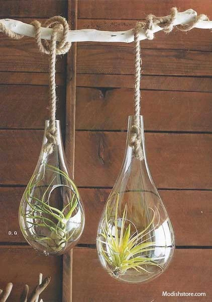 Roost Recycled Glass Bubble Hanging Terrariums Modish Store