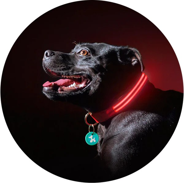 Led Light Dog Harness