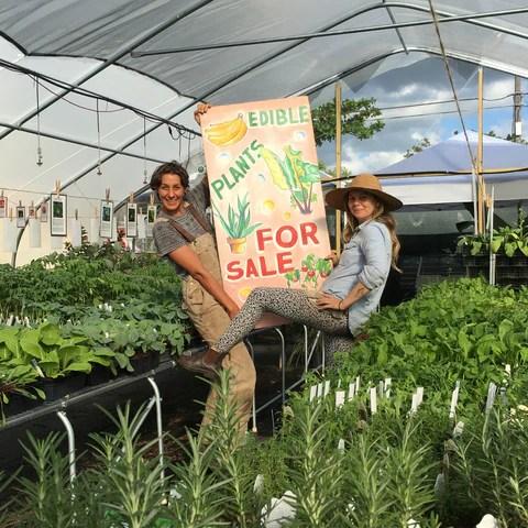 Edible Plant Nursery In Allapattah Miami Little River