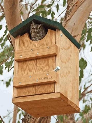 Owl Houses | Screech Owl House | Barn and Barred Owl ...