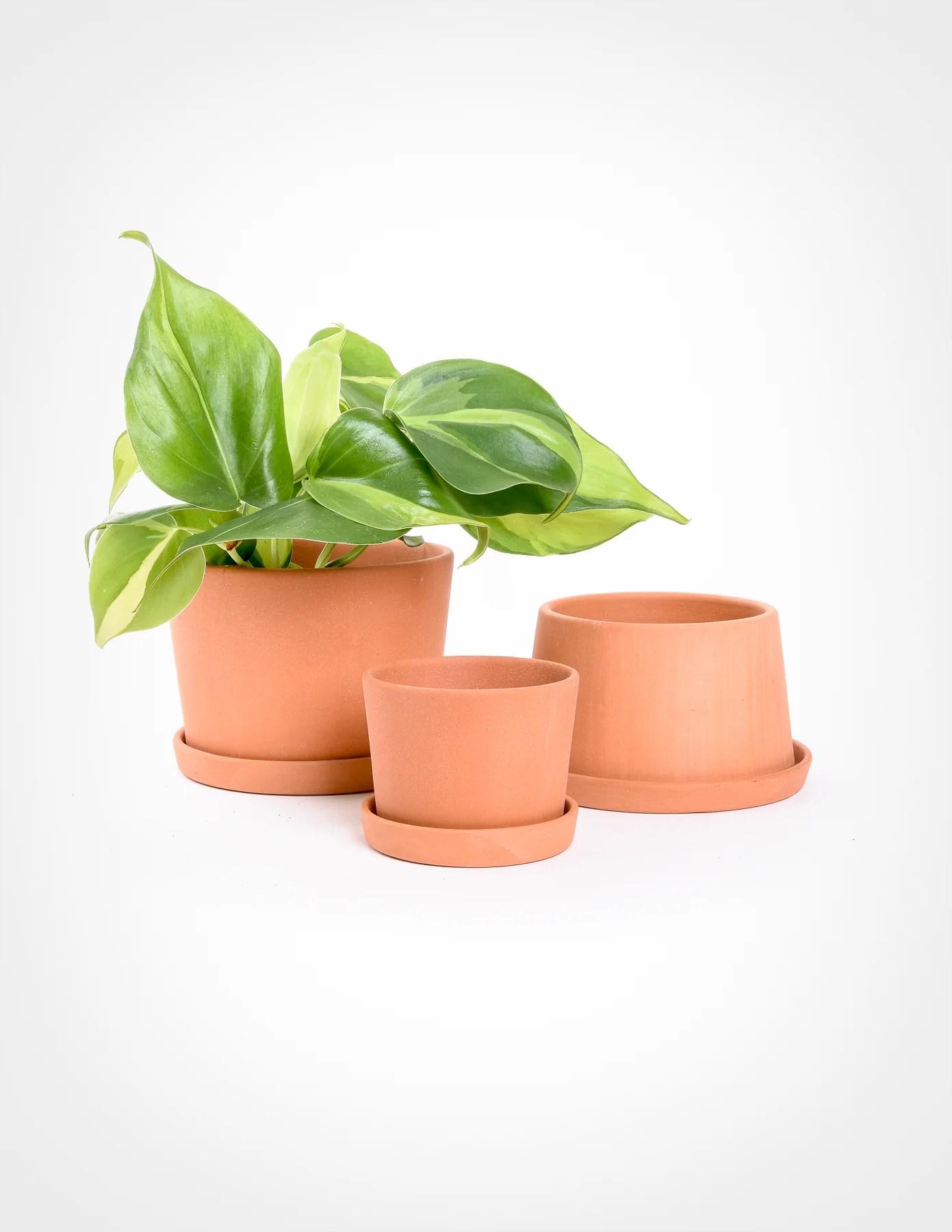 Mini Terracotta Planters