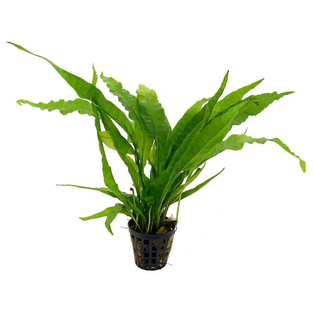 Aquatic Garden Plants
