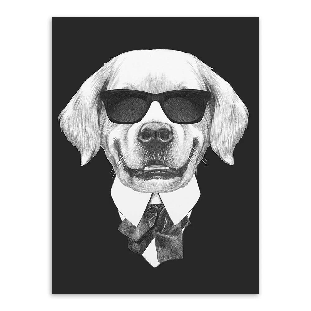 Jack Russell Wigs Terrier