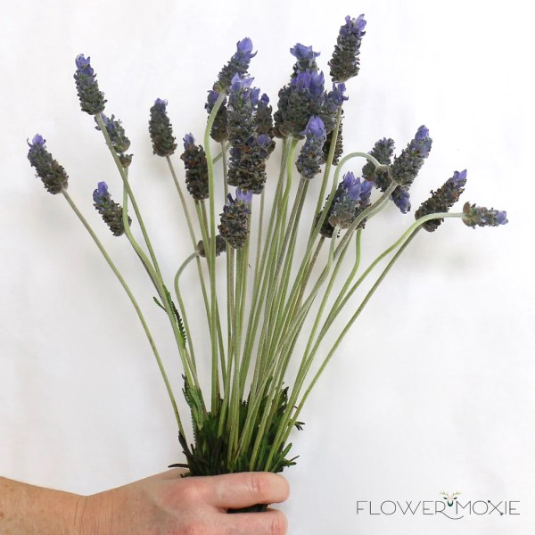 Lavender     Flower Moxie     Lavender   Lavender Wedding   Lavender Wedding Bouquet   Flower Moxie