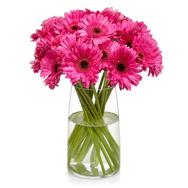 Buy Gerbera Daisies Online   Bill s Fresh Flowers Gerberas  one of Bill s most popular cut flowers