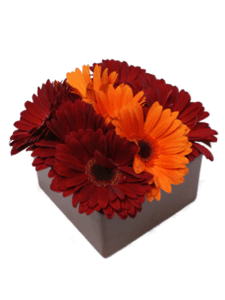 Gerbera Daisies   Autumn Flowers Online     Somerset Flowers   Gifts