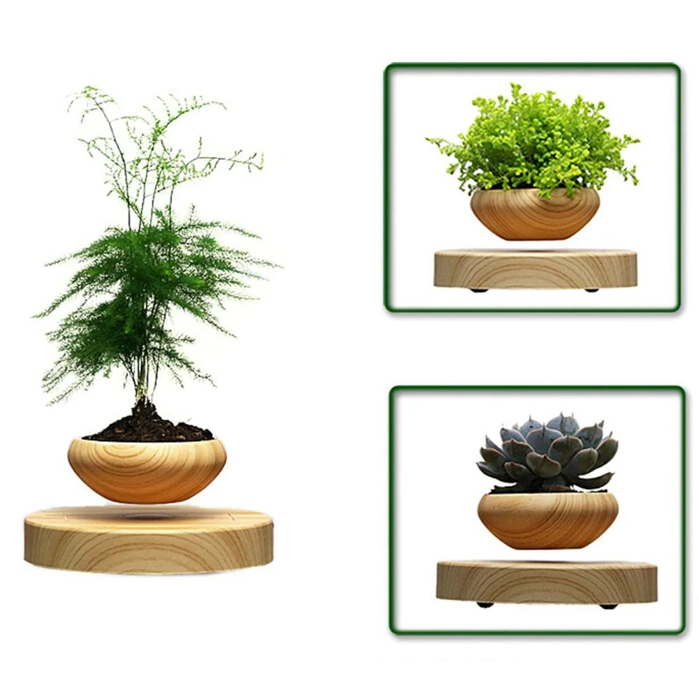 Floating Bonsai Amazon