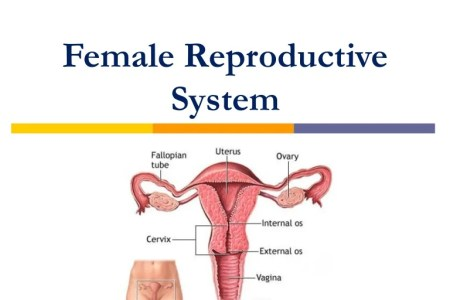 Images Of Female Anatomy Edi Maps Full Hd Maps