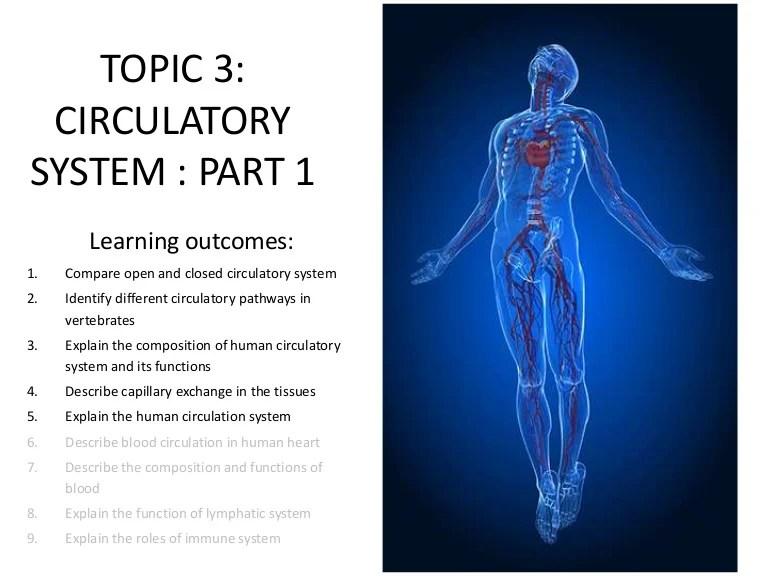 circulatory system parts - 768×576