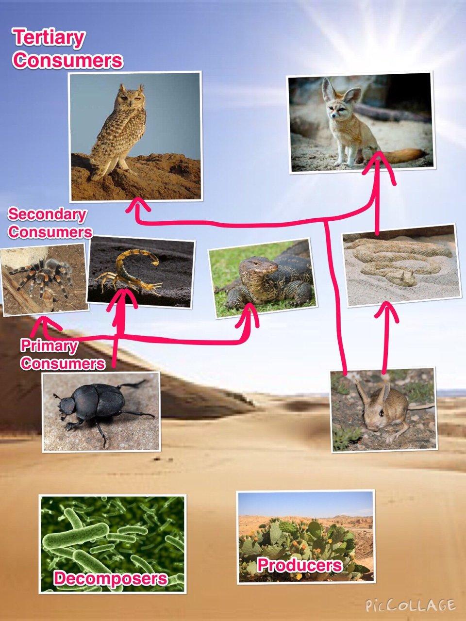 Sahara desert food web