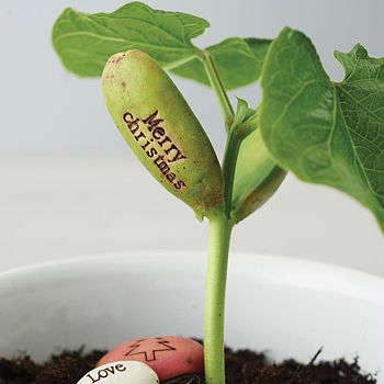 Sentimental Plant Seeds Beecyle Five Message Beanstalk
