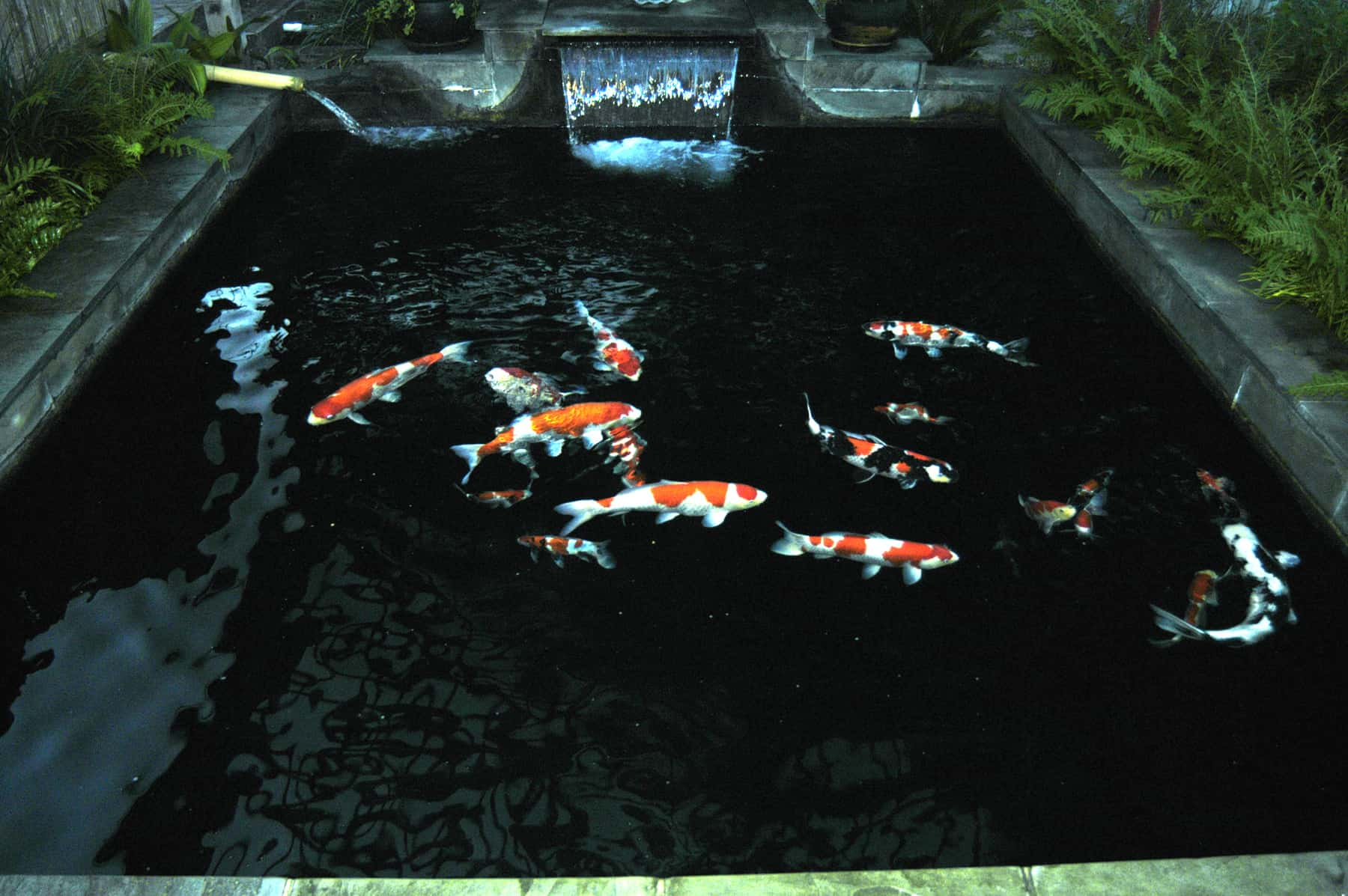 Goldfish Pond Designs