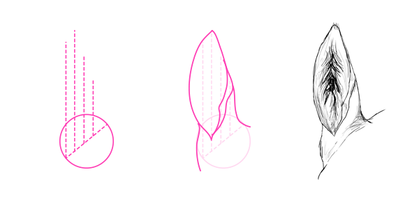 Horse Ears Back Drawing