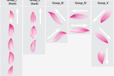 Flower petals drawing top artist of the year 2018 top artist of flower petals sketch realistic lotus flower drawing in steps with photoshop lotus flower drawing step lock the layer in place and draw the flower petal mightylinksfo