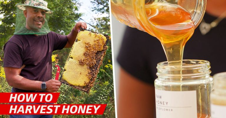 How Local Beekeepers Harvest Honey for NYC Restaurants