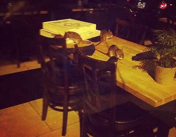 green eggs cafe philadelphia # 85