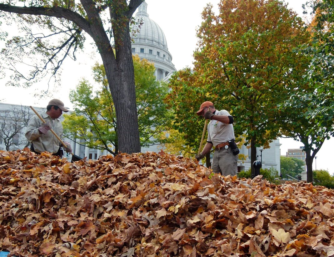 Cleaning Leaves Yard
