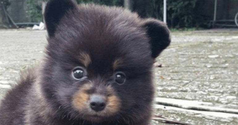 Bear Cub And Dog Hybrid