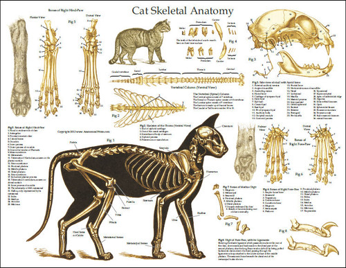 Dog Pelvic Skeleton Diagram