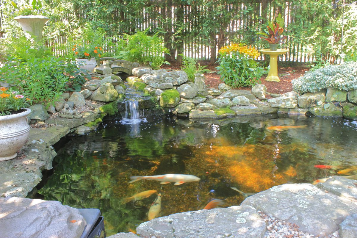 Backyard Pond Depth
