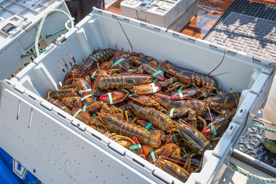 Fresh Lobster Near Boston