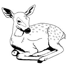 animal coloring pages printable # 11