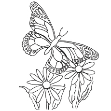 free printable butterfly coloring pages # 0