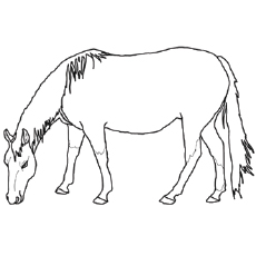 realistic horse coloring pages # 22