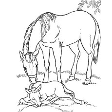 horse coloring pages # 60