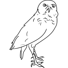 owl color pages # 10