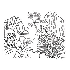 coral coloring pages # 2