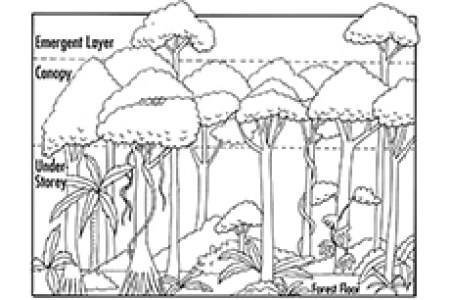 full image wallpapers new african coloring pages hd images