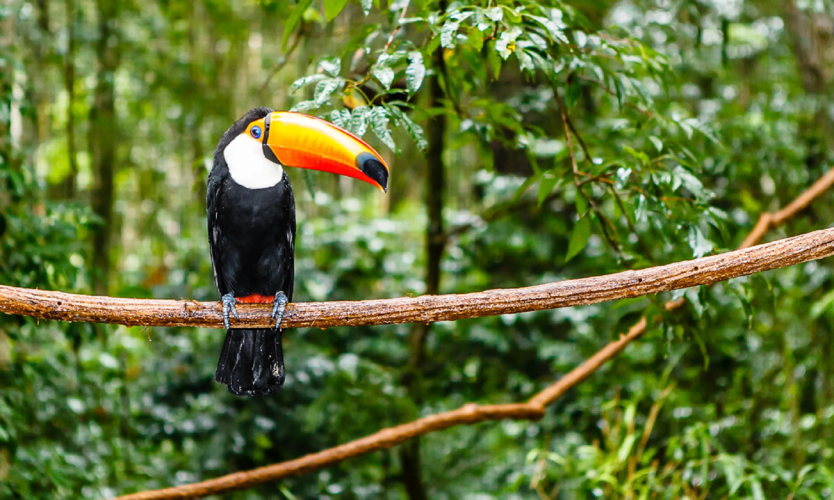 Image of: Amazon Rainforest Incredible Animals In Brazils Amazon Rainforest Wanderlust Travel Magazine Amazon Rainforest Of The Most Incredible Animals Wanderlust