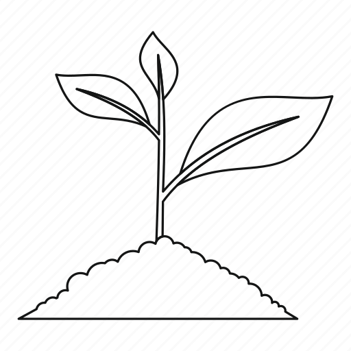Soil Growing Drawing Plant